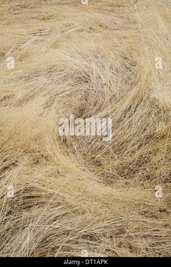 Seattle Washington USA Long grasses in meadow in Discovery Park Seattle - Stock Image