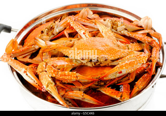 steamed crab in steaming pot - Stock Image