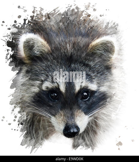 Digital Painting Of Raccoon Portrait - Stock Image