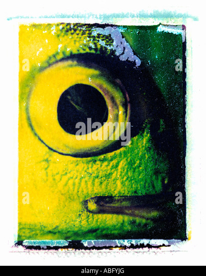 FISH EYE CLOSE UP ON POLAROID IMAGE TRANSFER - Stock Image