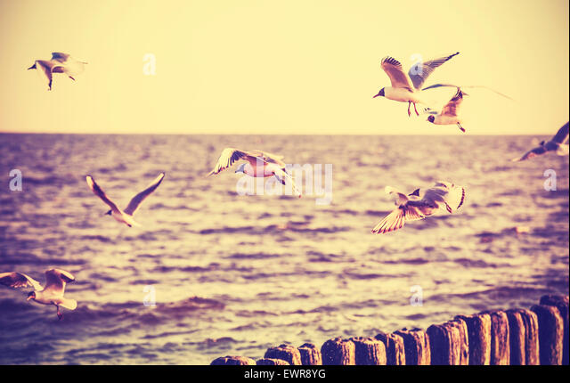 Vintage retro stylized photo of birds on the sea, old film effect. - Stock Image