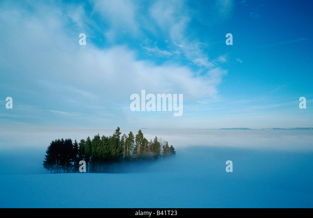 Woods in winter fog shredded Switzerland - Stock-Bilder