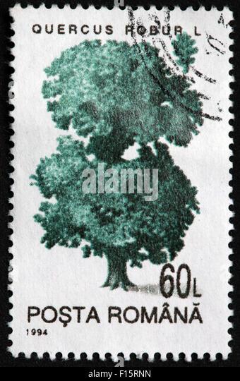 Quercus Robur L 60L posta romana 1994 stamp - Stock Image