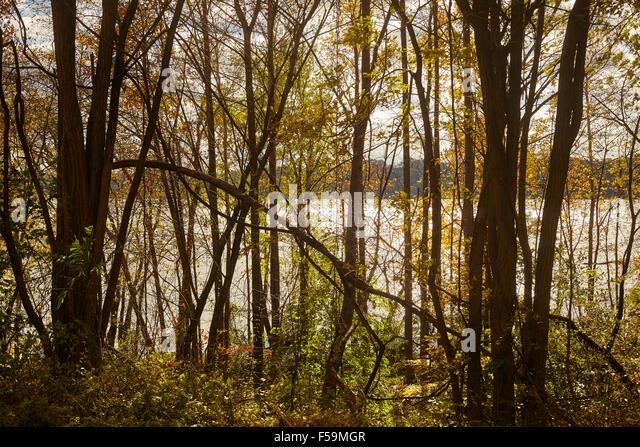 Susquehanna River with Fall Foliage near Columbia, Lancaster County, Pennsylvania, USA - Stock Image