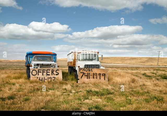 Old trucks for sale in a field - Stock Image