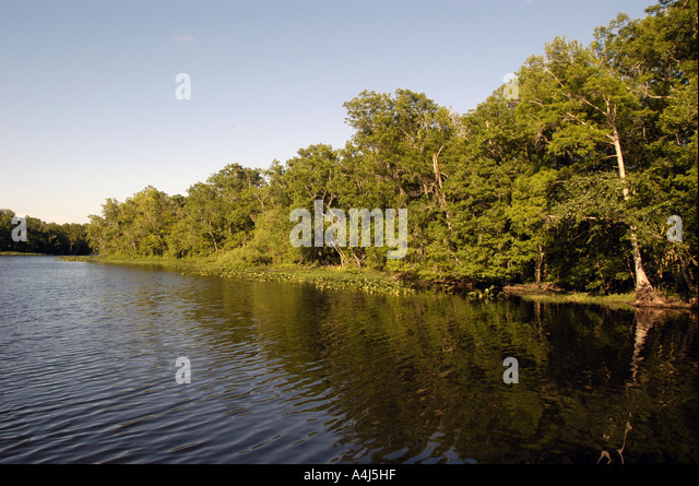 St Johns River Florida - Stock Image