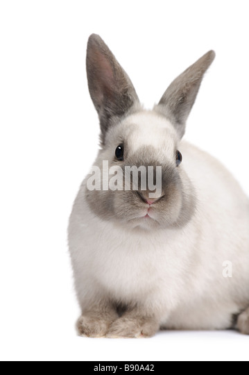 Rabbit in front of a white background - Stock Image