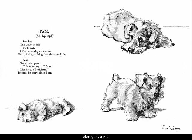 Three illustrations of a Sealyham terrier (Pam) by Cecil Aldin, with a poetic Epitaph by Patrick R Chalmers.    - Stock Image