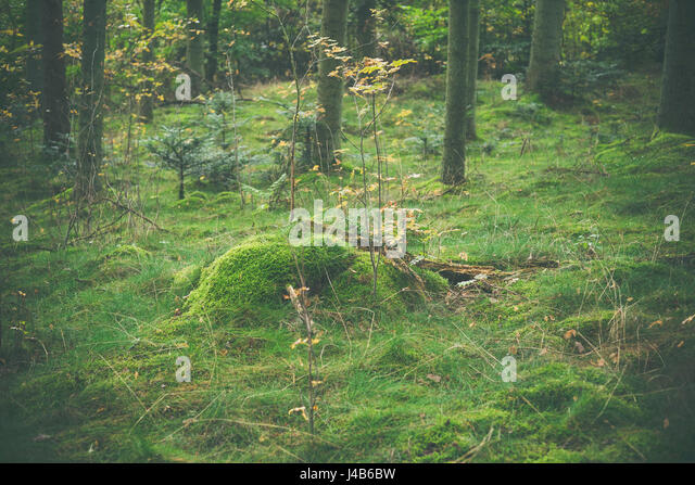 Wooden log with green moss in a forest at autumn - Stock Image