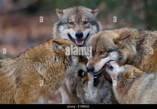 subservient stock photos amp subservient stock images alamy