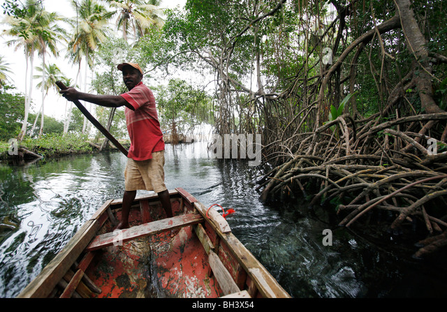 boatman mangroves, Rincon beach, Samana peninsula, Dominican Republic - Stock Image
