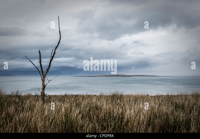 Dead tree looking towards the Isle of Pabay from the Isle of Skye, Highlands, Scotland, UK - Stock Image