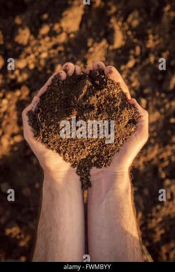 Arable land soil in hands of a responsible farmer, male caucasian farmer holding pile of soil, agronomist preparing - Stock Image
