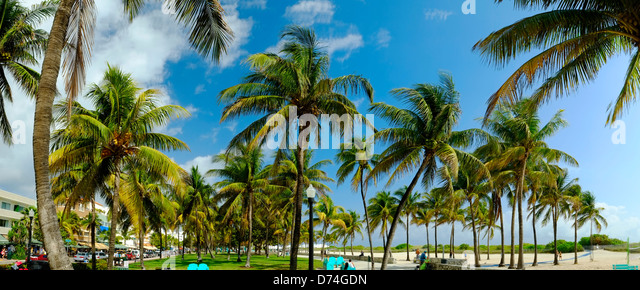 Palm Trees, South Beach, Miami, Florida, USA - Stock Image