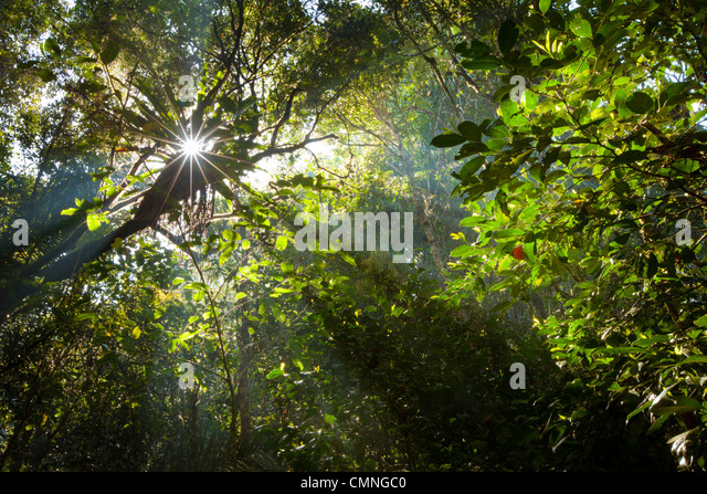 Early morning sun creating sunbeams through the humid rainforest canopy, Andasibe-Mantadia National Park, Madagascar. - Stock-Bilder