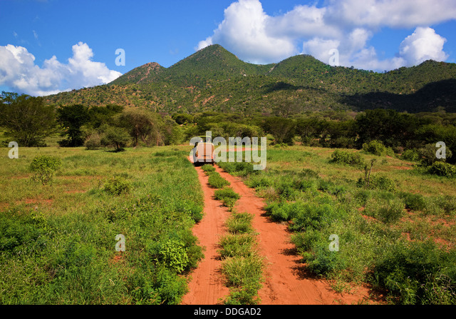 Driving through the Tsavo West National Park, Kenya, Africa on safari - Stock Image