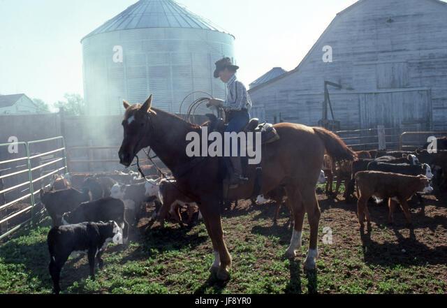 Cowboy in Stapleton Ohio preparing to lasso calves for branding - Stock Image