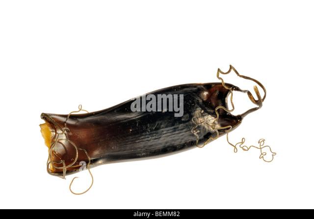 Dogfish head stock options