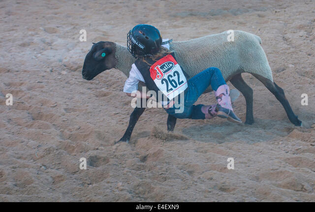 A boy riding on a sheep during a Mutton Busting contest - Stock Image