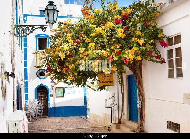 Blooming flowers at Albufeira old town, Algarve, Portugal - Stock-Bilder
