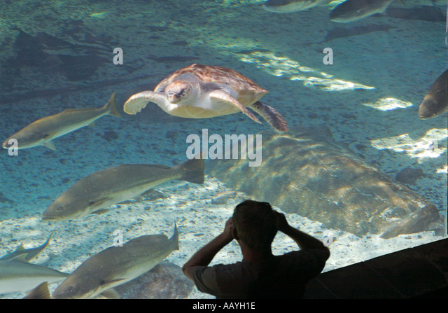 south africa cape town waterfront aquarium turtle - Stock Image