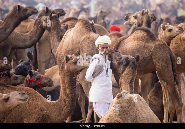 Pushkar Camel Mela, Pushkar, Rajasthan, India - Stock-Bilder