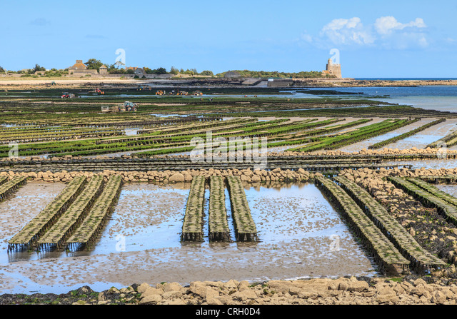 The oyster beds for which the fishing port of St-Vaast-La-Hougue, Normandy, France, is famous - Stock-Bilder