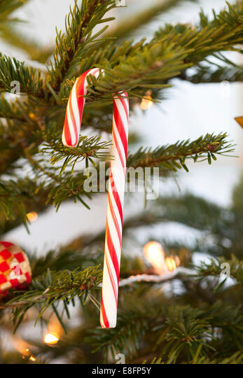 Candy Cane hanging on Christmas tree - Stock Image