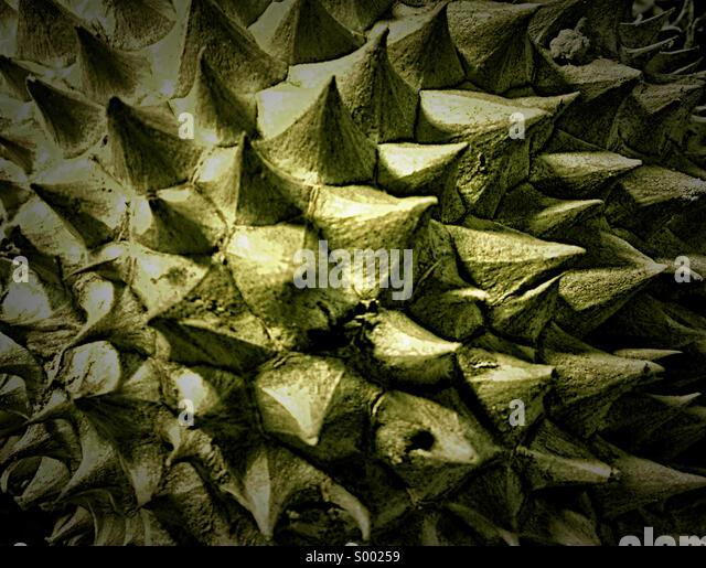 Close-up of Durian fruit in Phuket, Thailand marketplace. - Stock Image