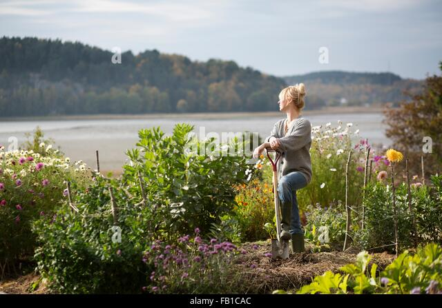 Woman looking out from organic garden, Orust, Sweden - Stock Image