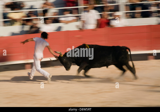 A man running from a charging bull while touching its head, with motion blur, during a Provence-style bullfight - Stock Image