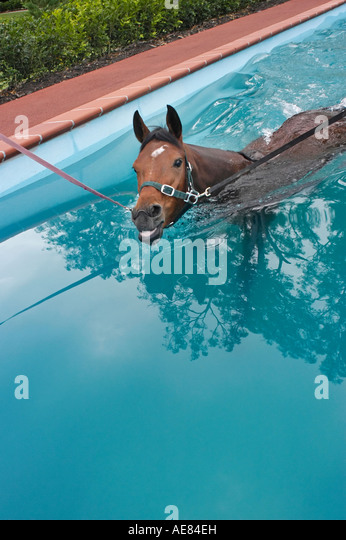 horse training in pool - Stock Image