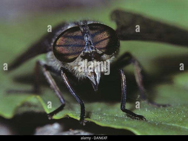 The Horseflies - Human Fly