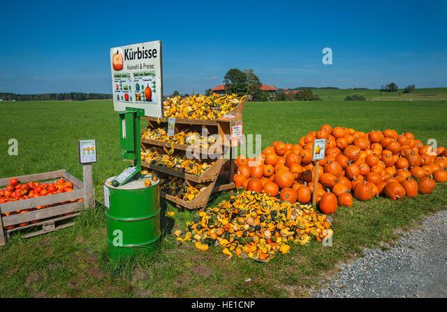 Squash (Cucurbita) and pumpkins for sale, Upper Bavaria, Bavaria, Germany - Stock Image