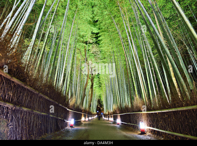 The bamboo forest of Kyoto, Japan. - Stock Image