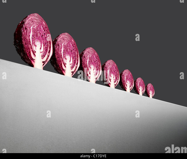 Row of red cabbages on a horizon at an abgle with perspective - Stock Image