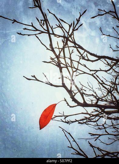 The last leaf - Stock Image