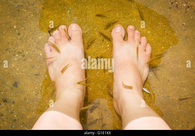 Fish foot massage stock photos fish foot massage stock for Fish foot massage