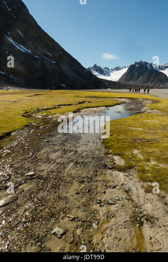 A small meltwater rill creates a green patch on otherwise bare gravel - Stock Image