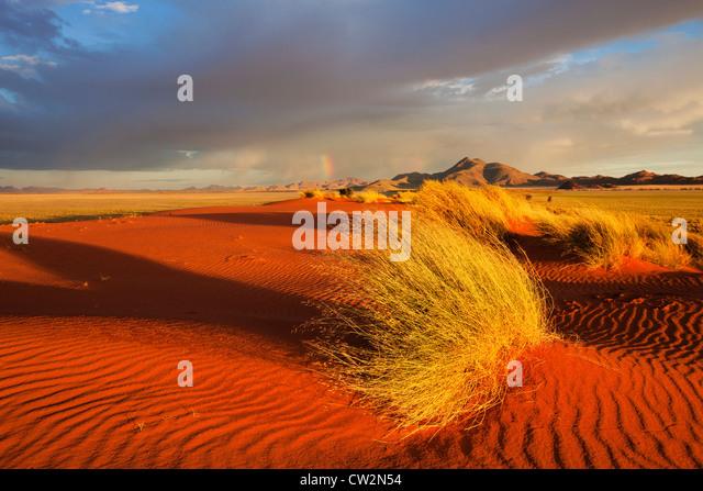 Sunset scenery showing the unique ecology of the south-west Namib desert or pro -Namib. NamibRand Nature Reserve, - Stock-Bilder