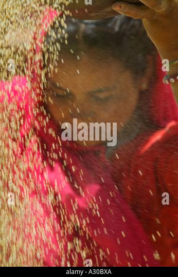 Girl in red sari winnowing wheat Rajasthan India - Stock Image
