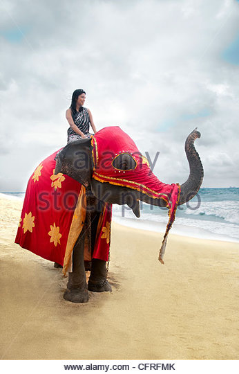 Sri Lankan woman sitting on an Asian elephant in festival attire on beach, Sri Lanka, Indian Ocean, Asia - Stock-Bilder