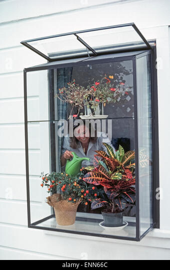 Installing a greenhouse window in a home is a popular way to nurture and display plants, as well as bring in more - Stock Image