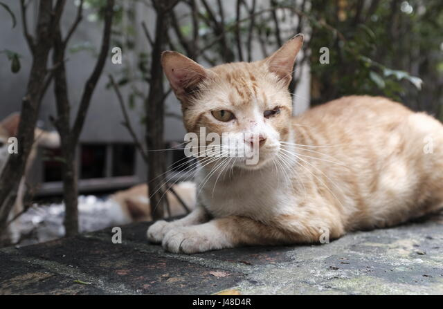 CAT ON STREET - Stock Image