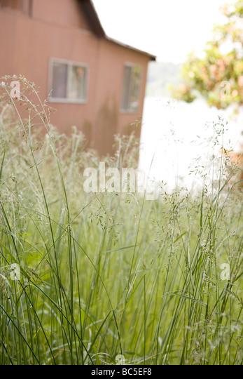 barn with tall grass - Stock Image