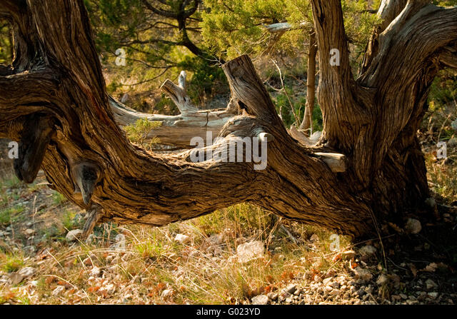 Verwitterter stock photos verwitterter stock images alamy for What is a tree trunk covered with 4 letters