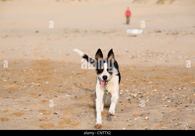 Holywell Beach Dogs