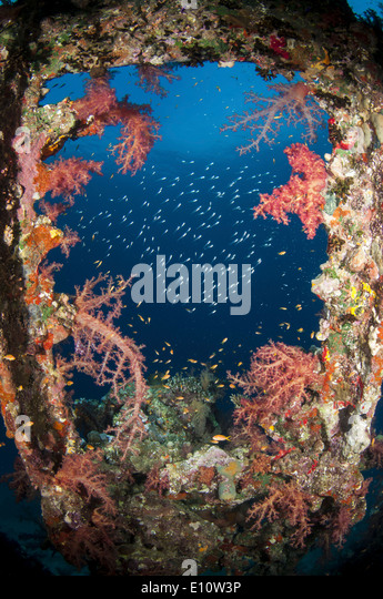 An old wreck window covered by soft corals, Egypt - Stock-Bilder