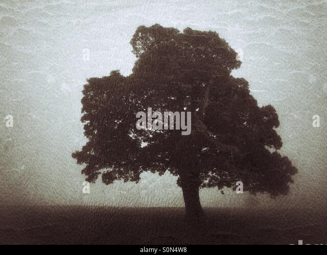 Lone tree in foggy field - Stock Image