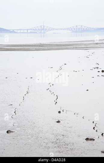 Tide out with the Forth Bridge and Forth Road Bridge in the background. - Stock Image